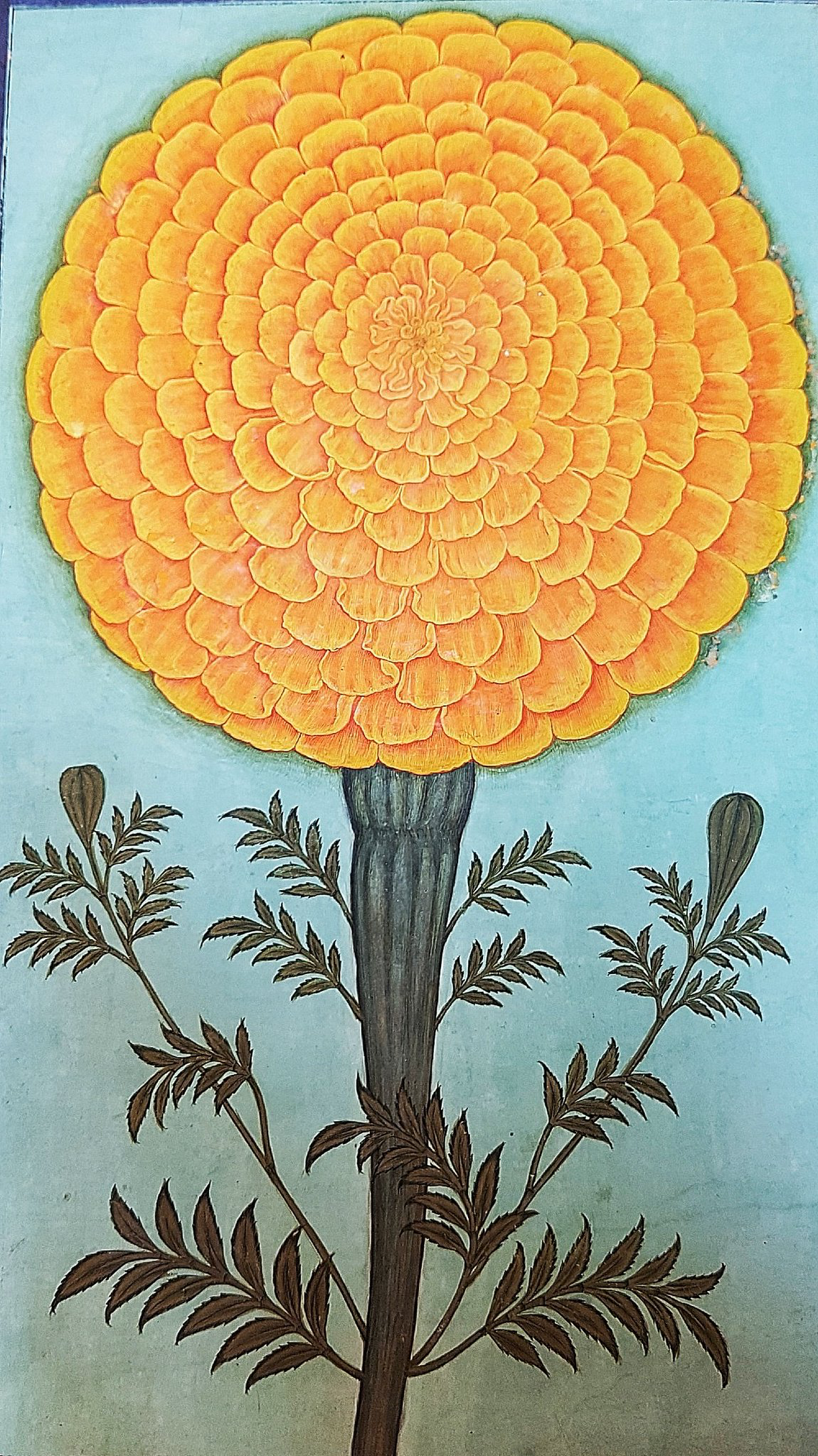 """marigolds and symbolism Marigolds are associated with dia de los muertos, or the day of the dead it is said that their vibrant yellow colors guide spirits into the afterlife the marigold is also called the """"herb of the sun"""", representing passion and even creativity."""