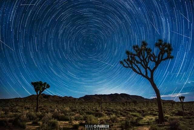 Meteor Shower over Joshua Tree 8-12-15