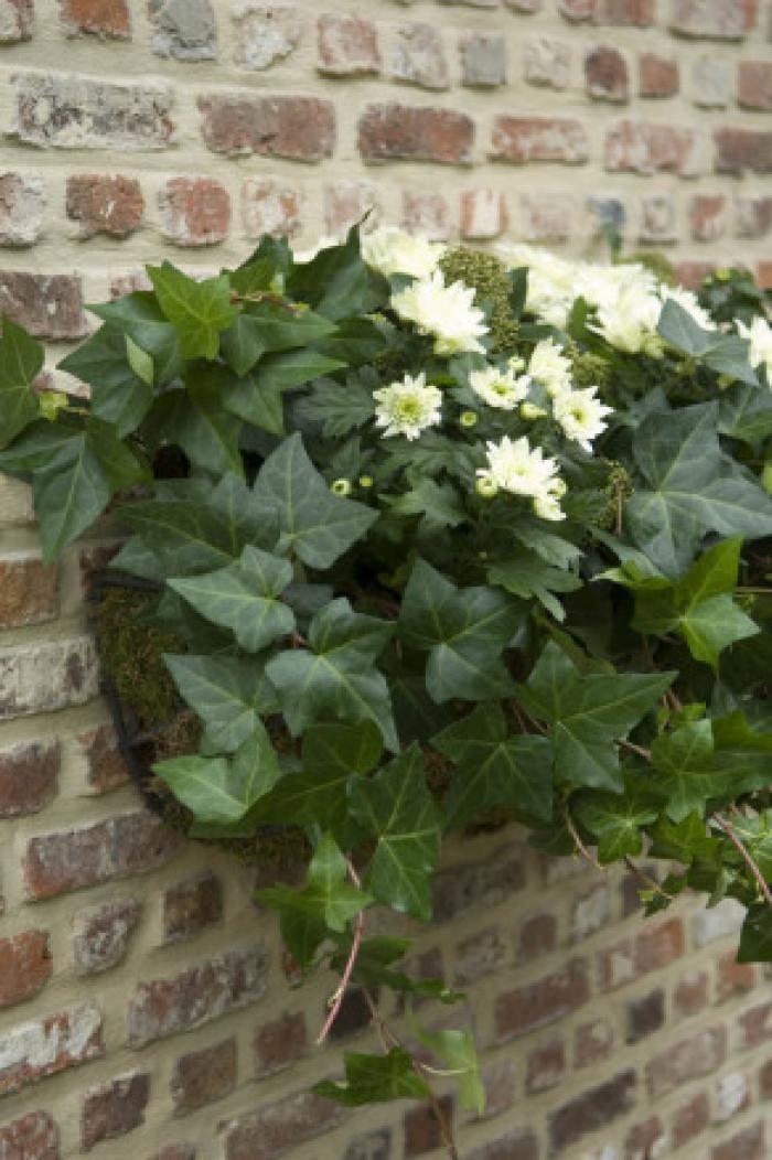 top 10 des plantes pour jardini res d 39 hiver jardin hiver femmes d 39 aujourd 39 hui jardin d. Black Bedroom Furniture Sets. Home Design Ideas