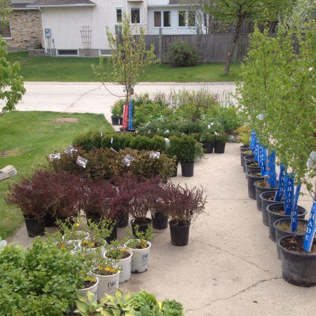 Our urban nursery. Great plants!