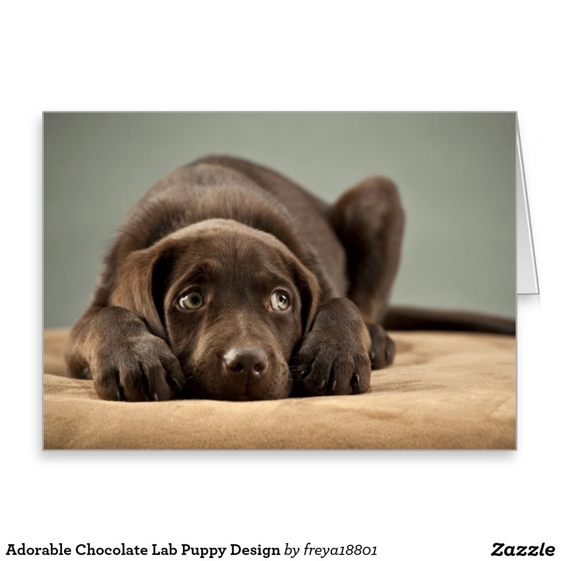 Adorable Chocolate Lab Puppy Design Greeting Card