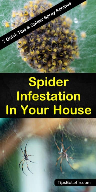 How To Get Rid Of A Spider Infestation Outside