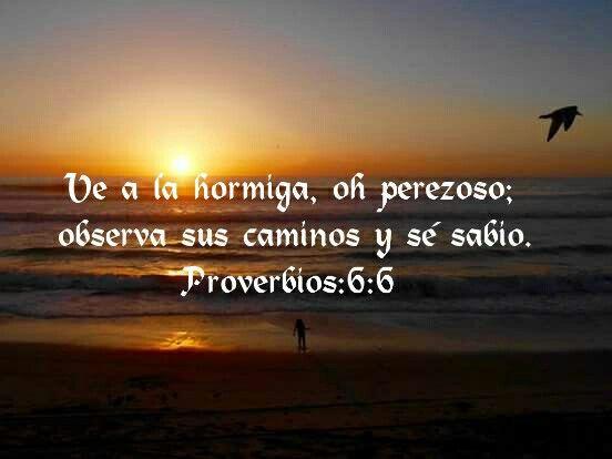 Proverbios 6:6