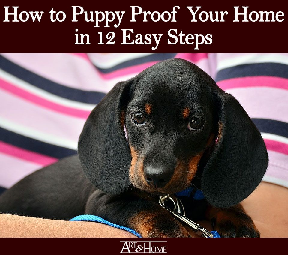 How to puppy proof your home in 12 easy steps art home