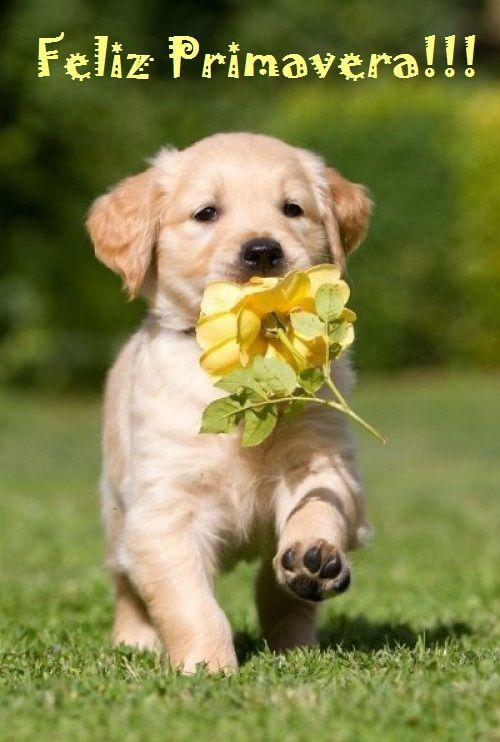 Feliz Primavera !!! 530603402b317d119d21a10c9460f781