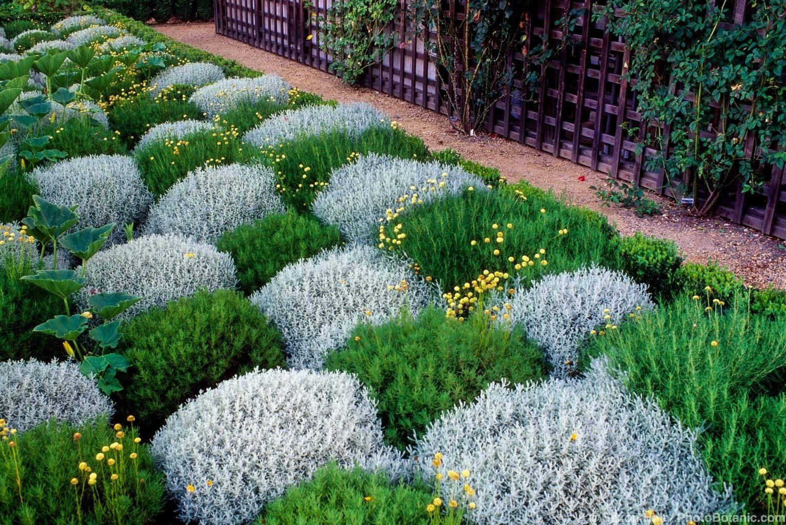 Waterwise Garden Design waterwise garden checkerboard planting of green and silver