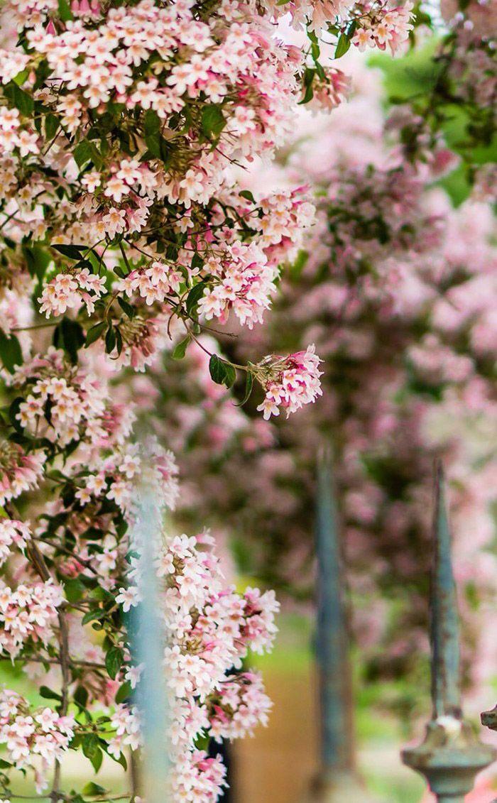 Littlebug 365 วอลเปเปอร ม อถ อ ร ปดอกไม สวยๆ วอลเปเปอร สวย ศ ลปะ