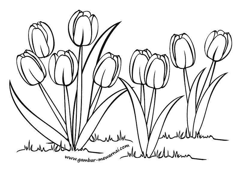 Contoh Gambar Bunga Tulip Kartun Di 2020 Bunga Tulip Bunga Gambar Figur