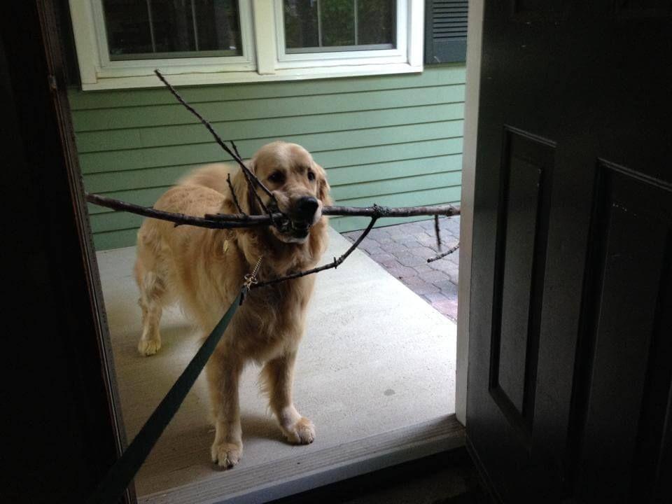 Aktivitäten Mit Hund