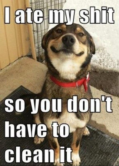 i'm glad my dogs don't! But this made me lol!