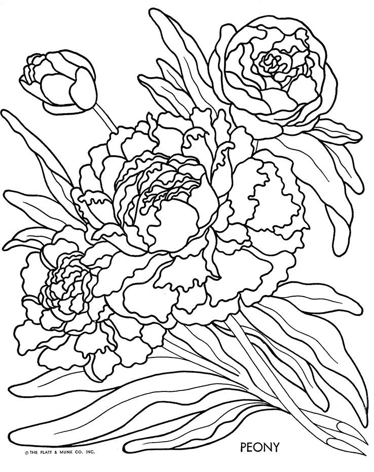 Flowers To Color Flower Coloring Pages Drawing Artwork