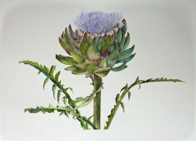 Dominique Guillon Aquarelliste Botanique Peintre Isere Lyon Cours