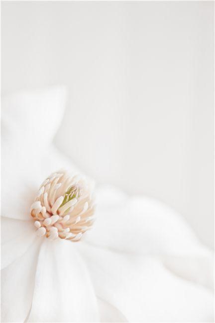 Jardin D Eden Photographie Florale Fleurs Fleurs Blanches