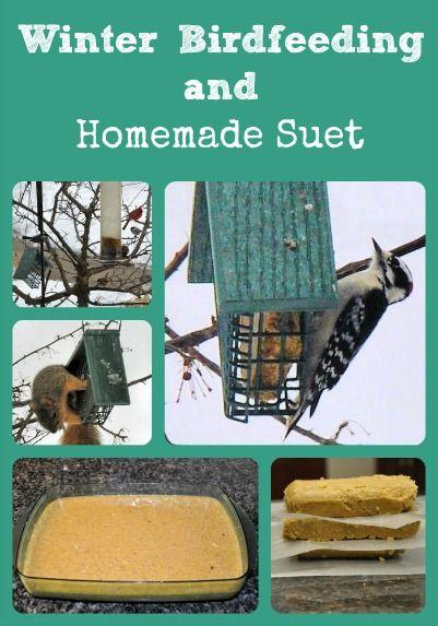 die besten 25 feeding birds ideen auf pinterest vogelfutter futter f r wilde v gel und. Black Bedroom Furniture Sets. Home Design Ideas