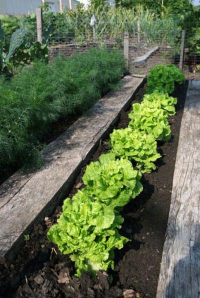 Organic Garden Soil Use Organic Compost More Plants Organic