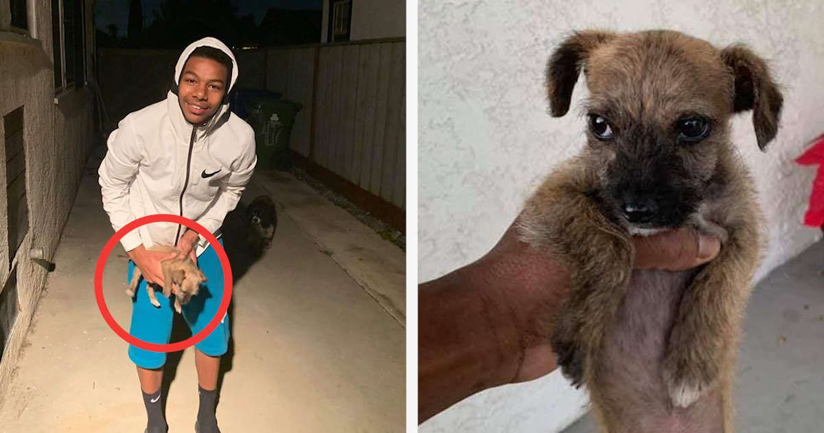Boy Finds Tiny Puppy Alone And Shivering Outside His House