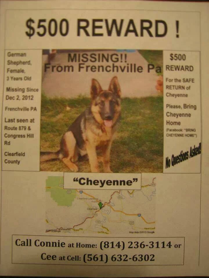 Bring Cheyenne Home S Photo Losing A Dog Clearfield County