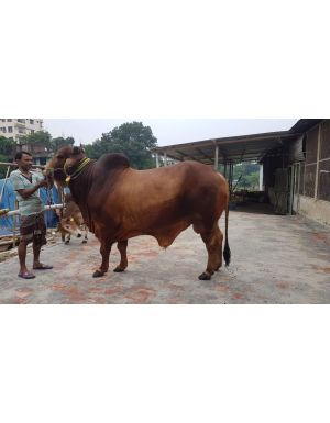 Home: eorder com bd - An Online Marketplace cattle farm in