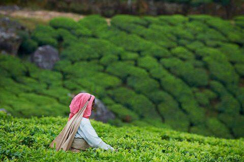 Kerala, en India, es un destino que nadie se debería perder. http://ow.ly/tYTKi