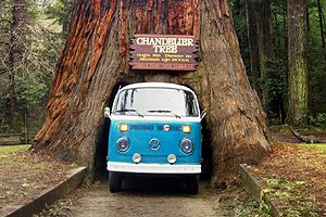 Three Drive through trees within 200 miles of each other. You can ...