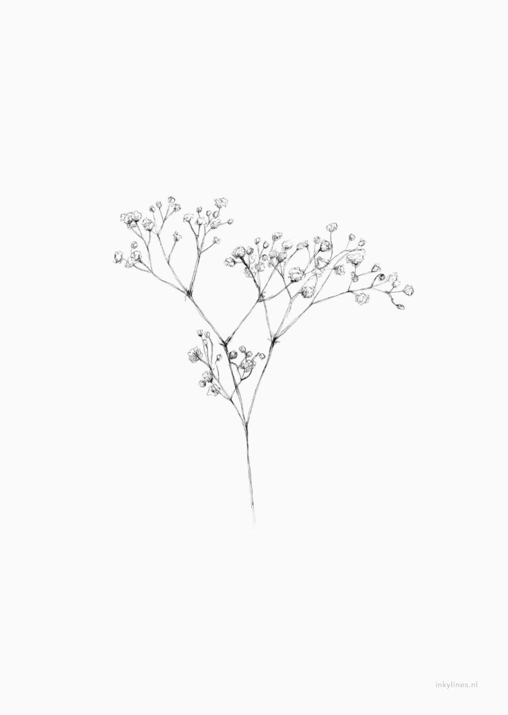 Flowers Gypsophila In 2020 Baby Breath Tattoo Gypsophila Tattoo Flower Illustration