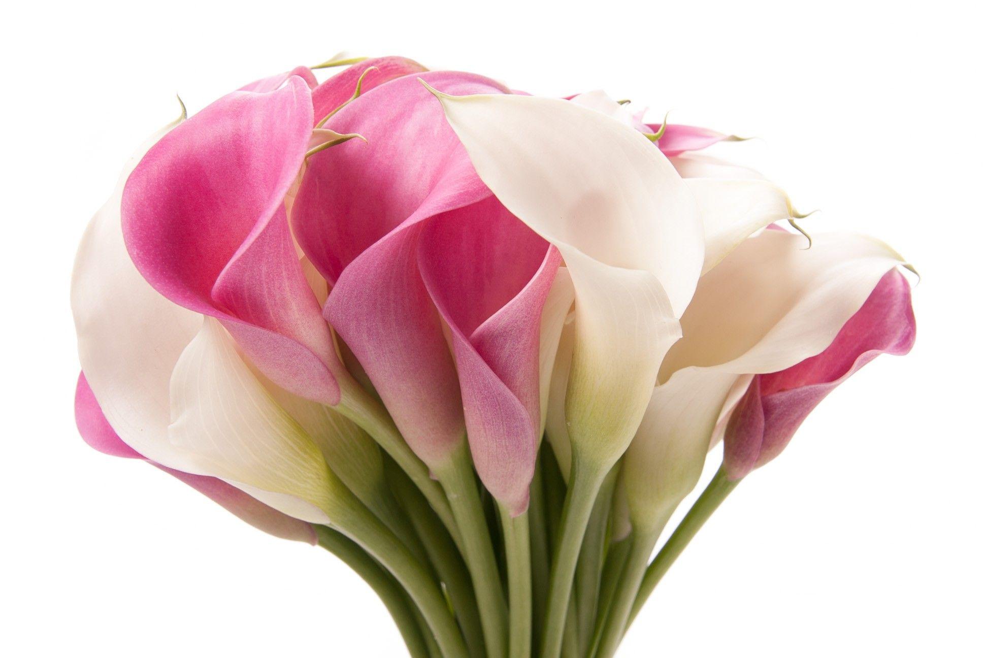 Pin By Vicky Williams On Calla Love Calla Lily White Calla Lily Bouquet Calla Lily Bouquet