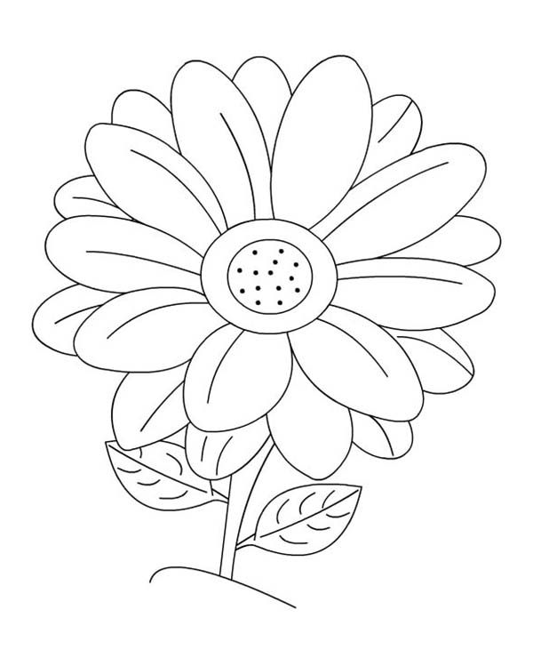 Daisy Flower Blossom Coloring Page
