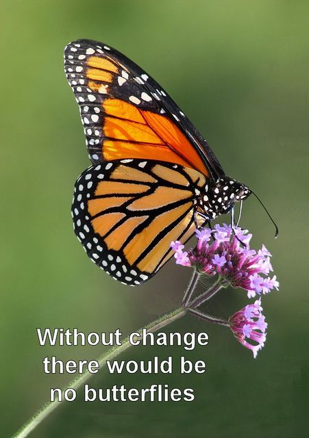 Without change there would be no butterflies This I