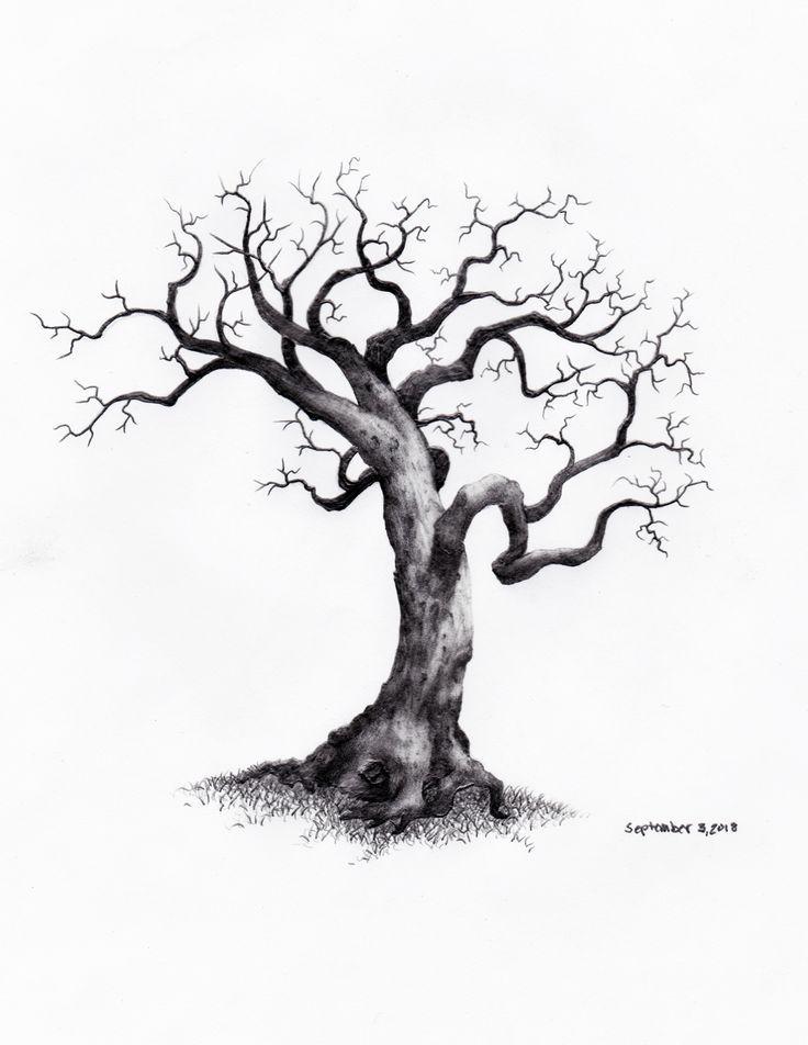 daily tree sketch  u2013 september 3  2018  trees  treesketch