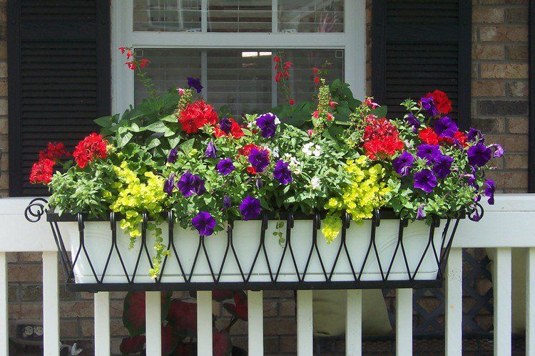 composition jardini re t de g raniums rouges et p tunias violets pour d corer le garde corps. Black Bedroom Furniture Sets. Home Design Ideas
