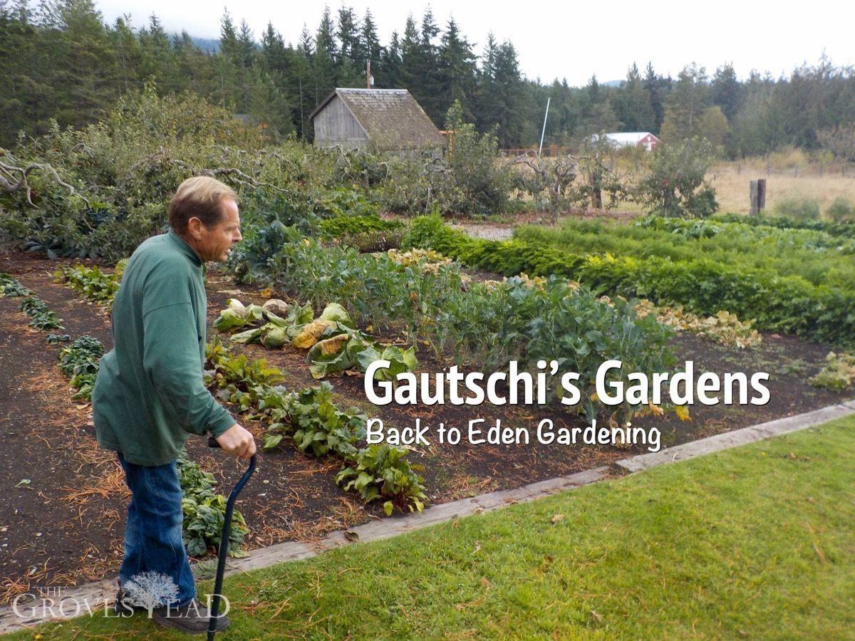 Paul Gautschi S Back To Eden Garden Organic Gardening Natural Garden Garden Of Eden