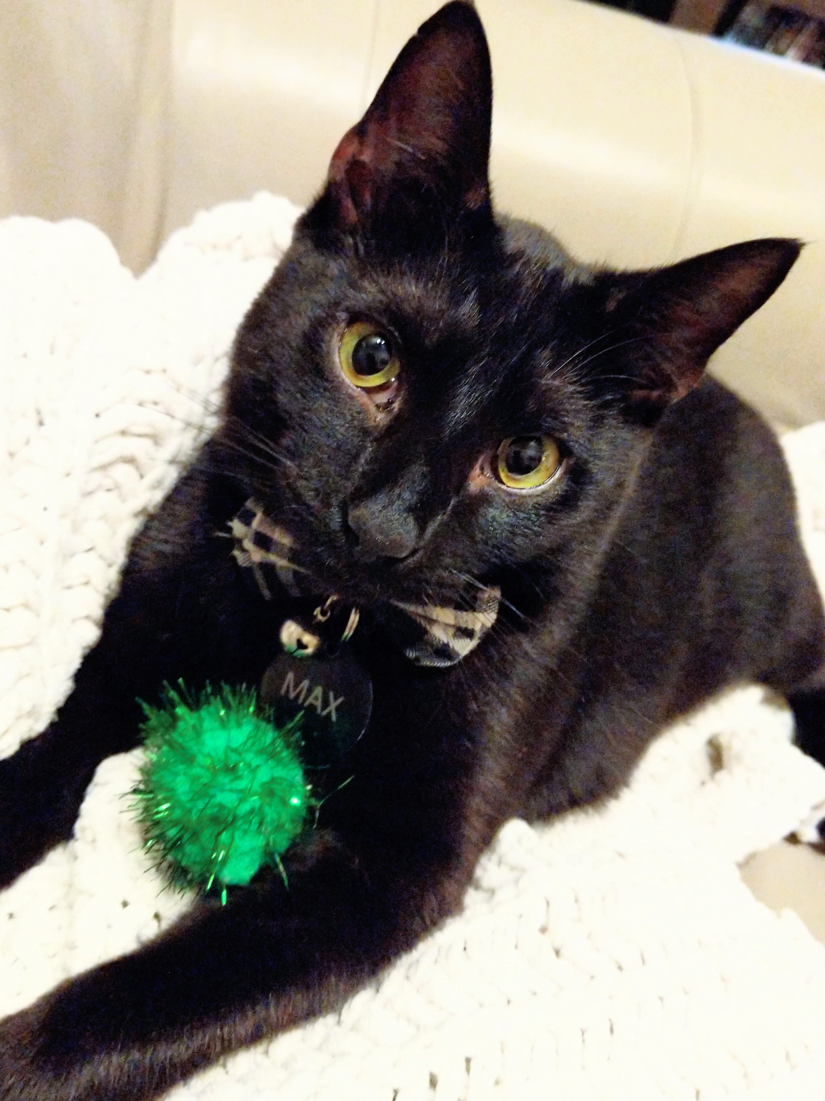 Adorable Black Cat Pom Pom In 2020 Cat Essentials Cute Black Kitten Cat Mom