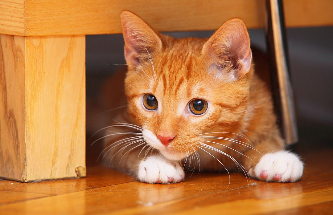 70+ Ginger Cat Names Cute, Hilarious Names You'll Love