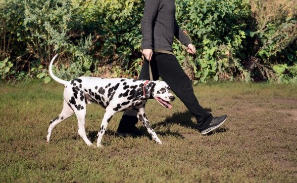 I Recently Trained A Deaf Dog With Fear And Anxiety Issues Here Are