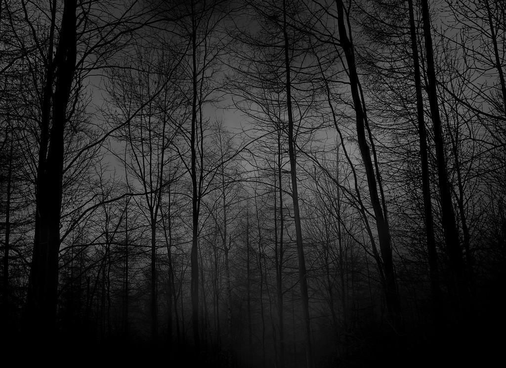 Depressive forest black grey dark night hd wallpaper for Black white and grey wallpaper