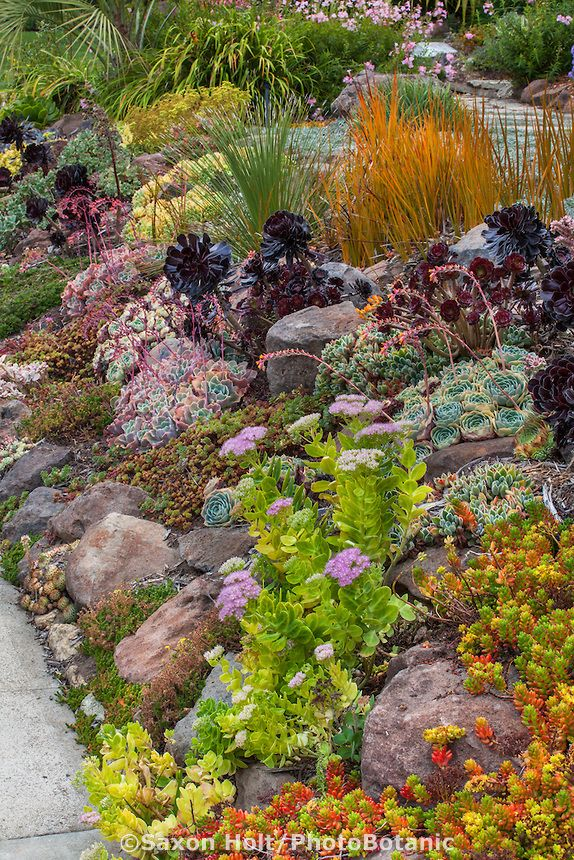 Sloped front yard garden by sidewalk with drought tolerant succulent