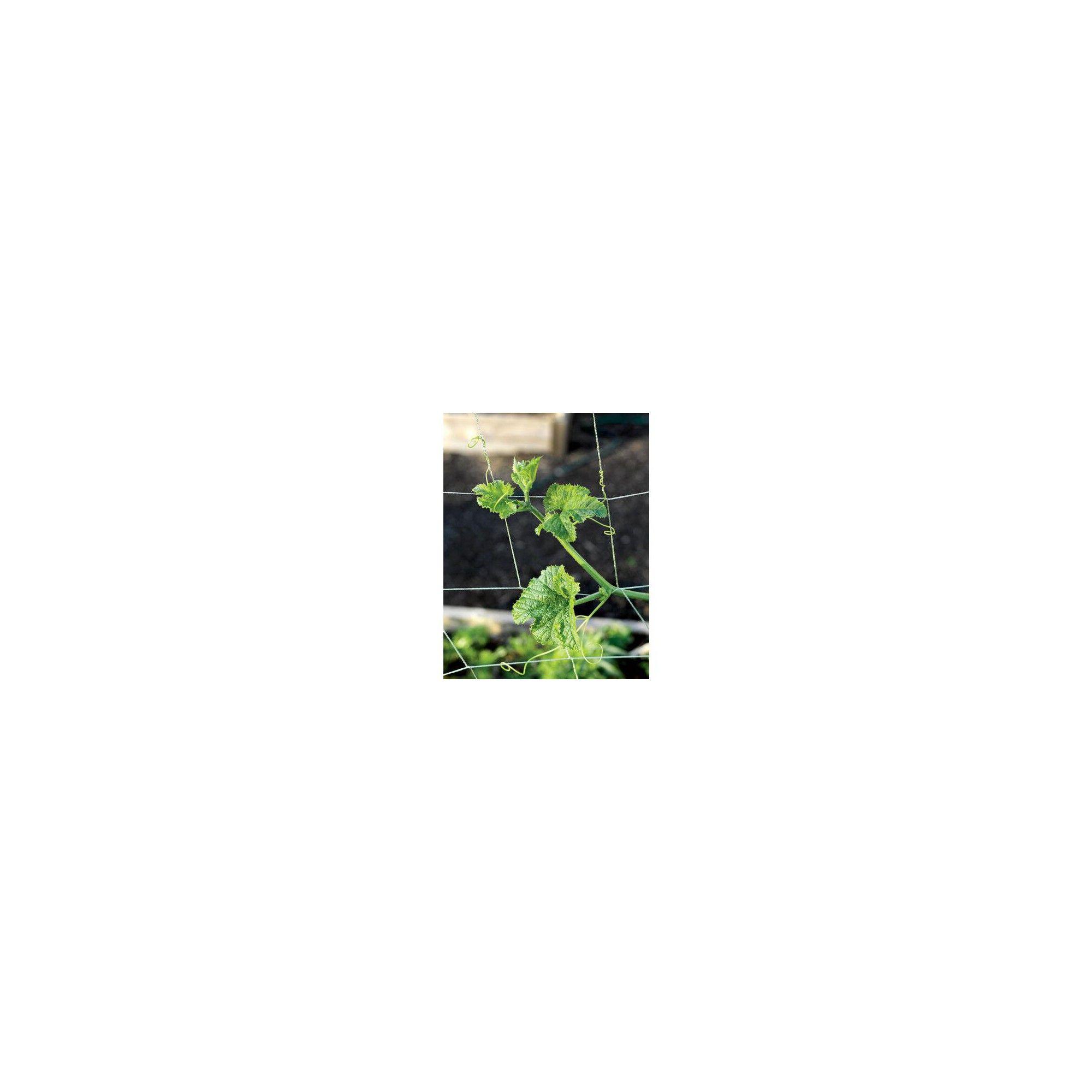 Vine And Veggie Trellis Netting 5 X 30 Gardener S Supply