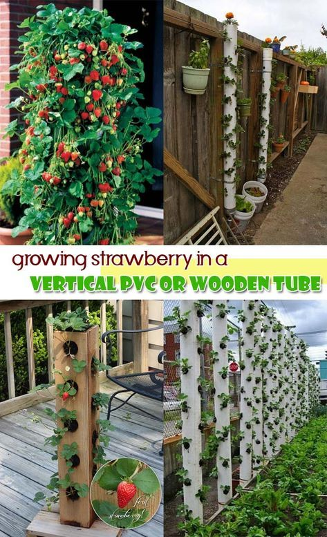 Photo of DIY Saving Space Ideas for Growing Strawberries – HomeDesignInspired