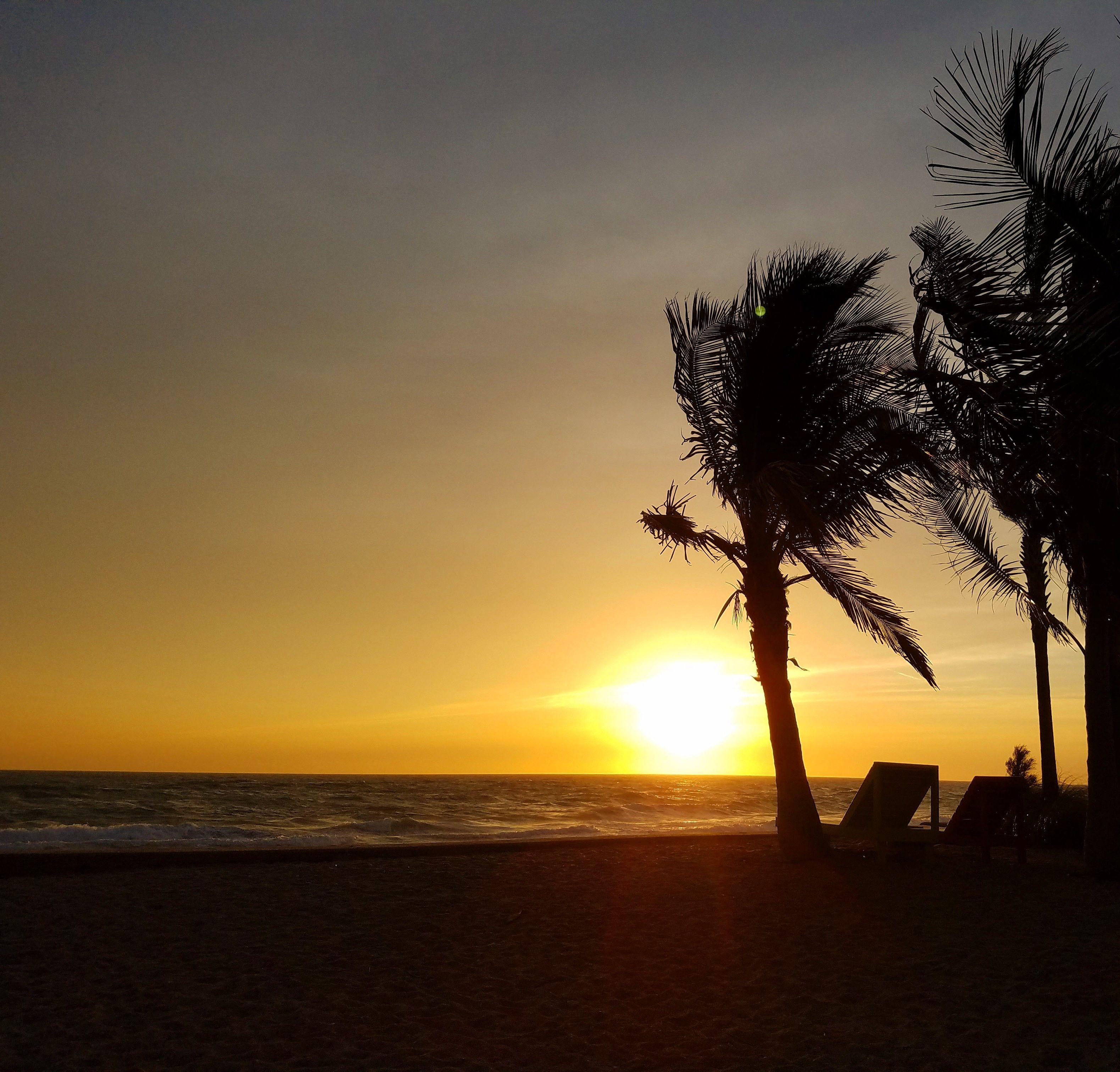 Windswept palms here on Manasota Key!   State parks ...