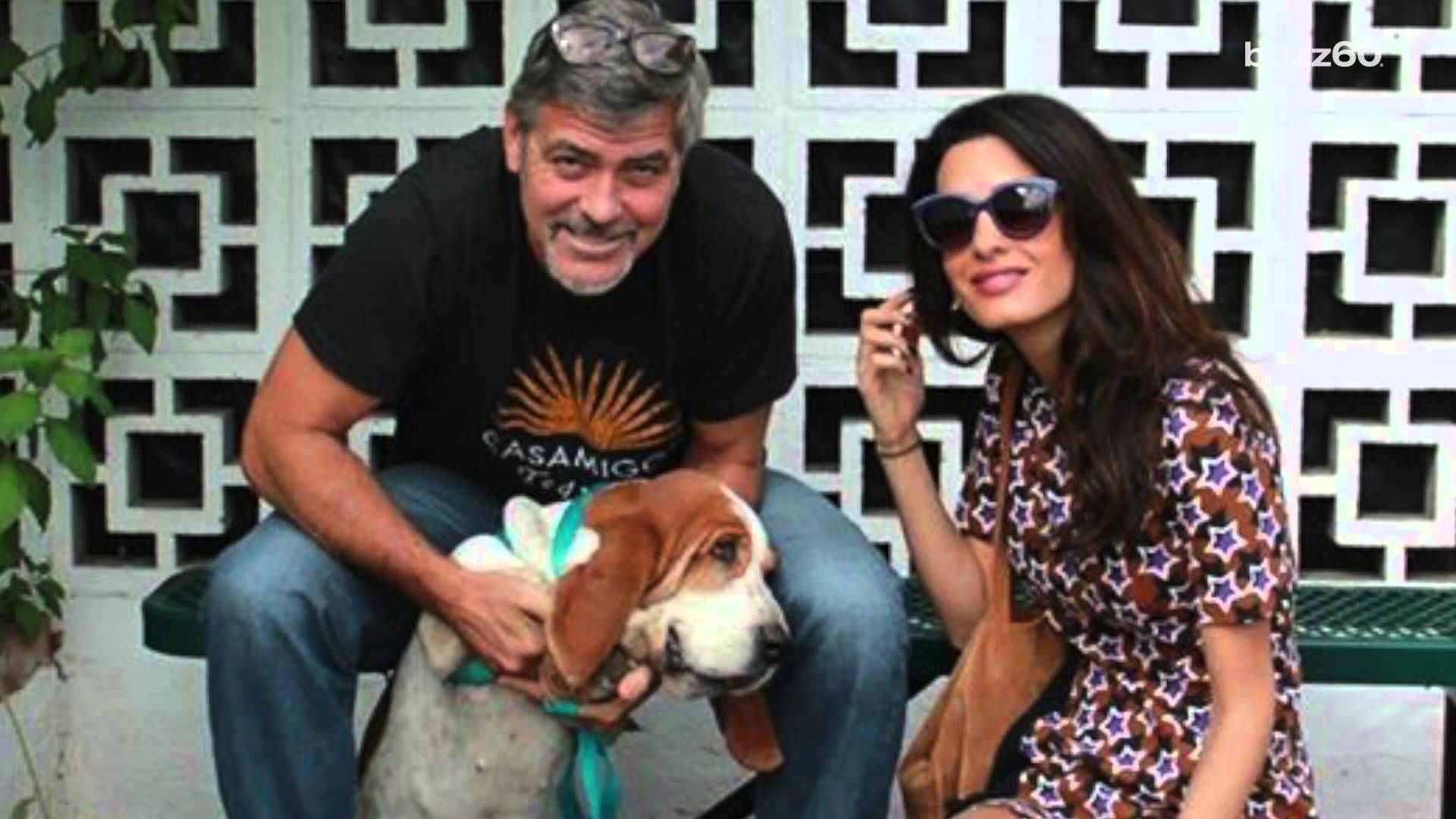 George and Amal Clooney adopt an adorable shelter dog
