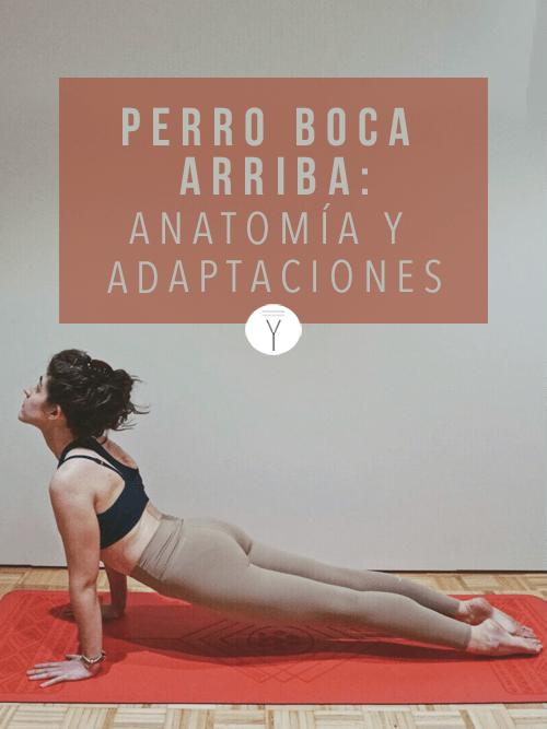 Entender El Perro Boca Arriba Anatomía Y Adaptaciones Yogui Principiante Hacer Yoga Estilos De Yoga Yoga Principiantes