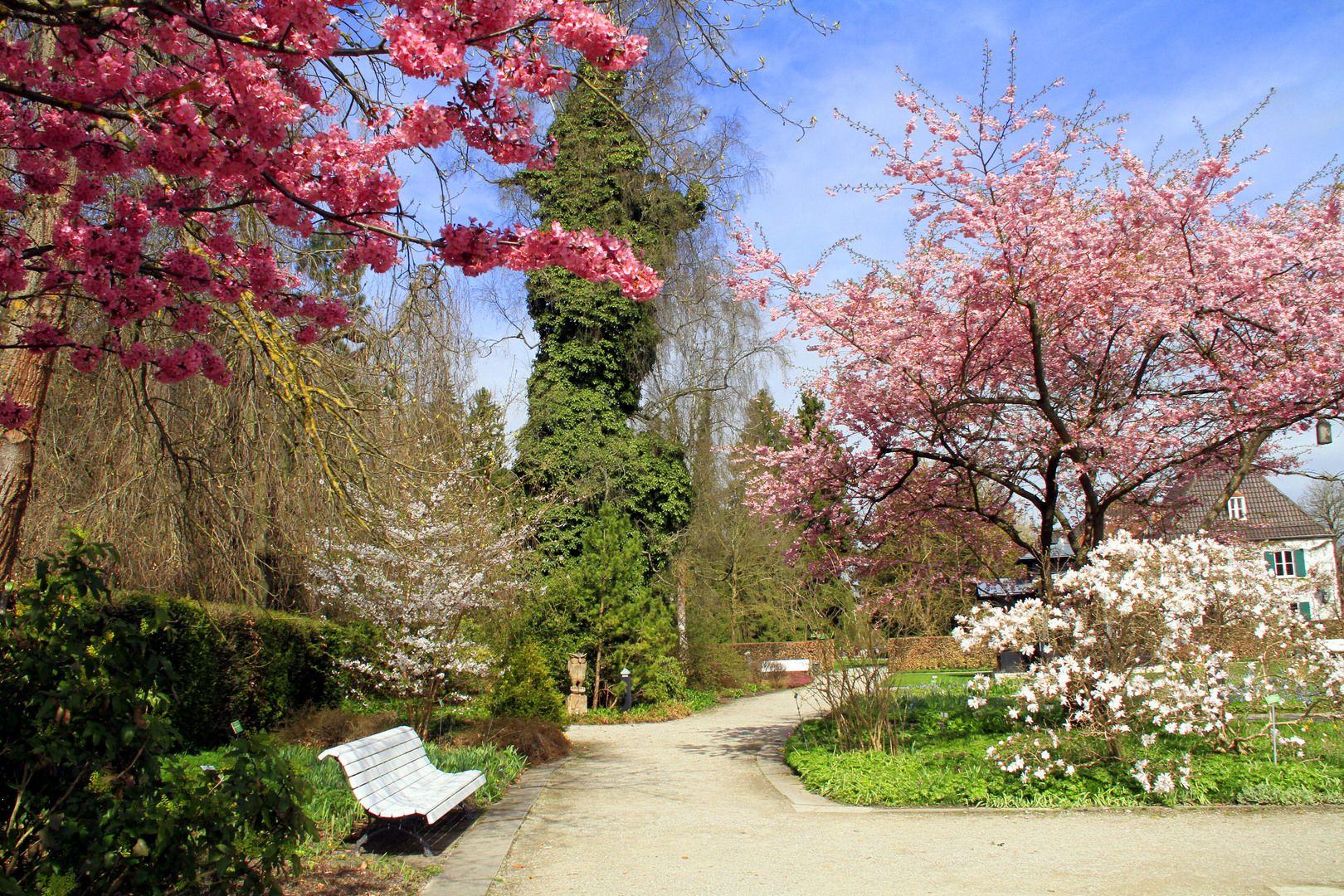 Gartenbau Augsburg botanischer garten augsburg ботанический сад