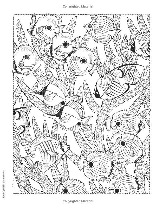 Creative Haven Naturescapes Coloring Book Creative Haven Coloring Books Patricia J Wynne C Coloring Books Creative Haven Coloring Books Fish Coloring Page