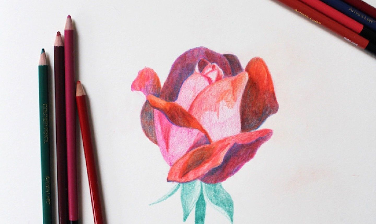 Learn to draw this rose step by step coloured pencils colored pencil artwork