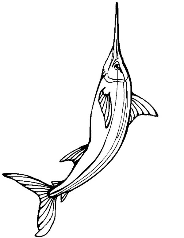 Big Size Of Swordfish Coloring Page Color Luna Coloring Pages Coloring Pictures Color