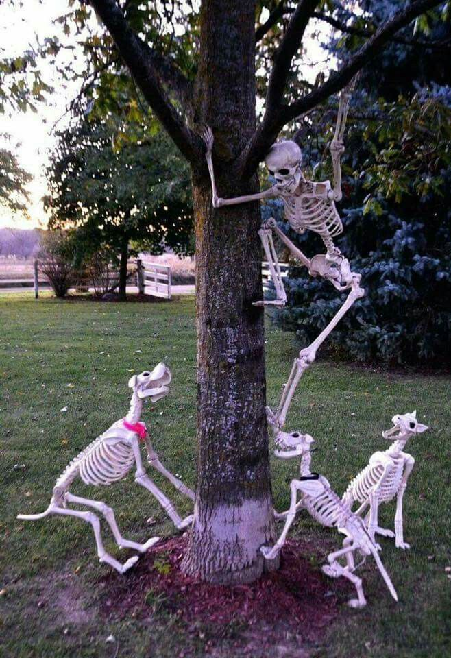 Pin by Amanda Reyes on Halloween Pinterest Halloween ideas - halloween decorations skeletons