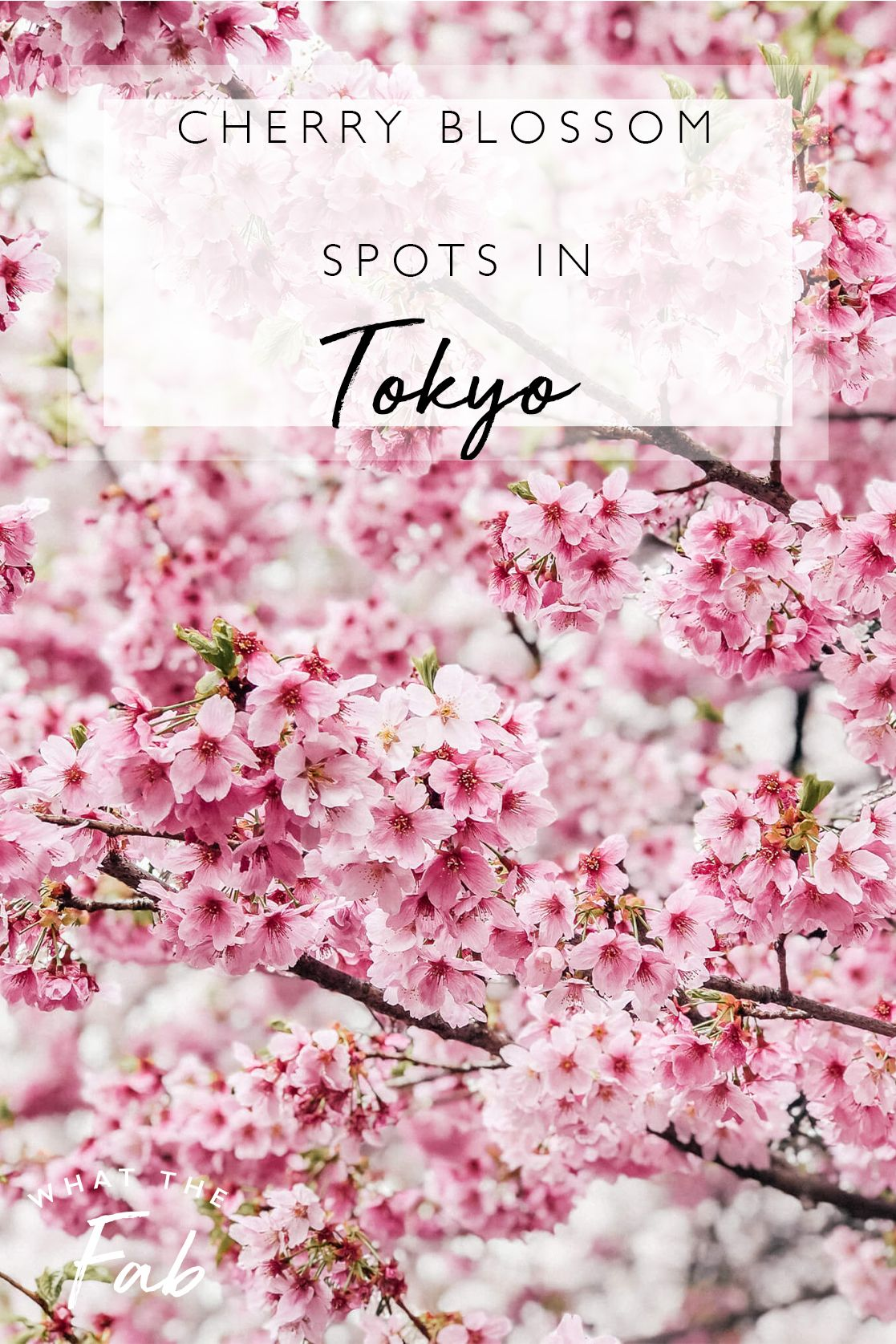 Best Places To View Cherry Blossoms In Tokyo 2021 Japan Travel Destinations Travel Destinations Asia Japan Travel Guide