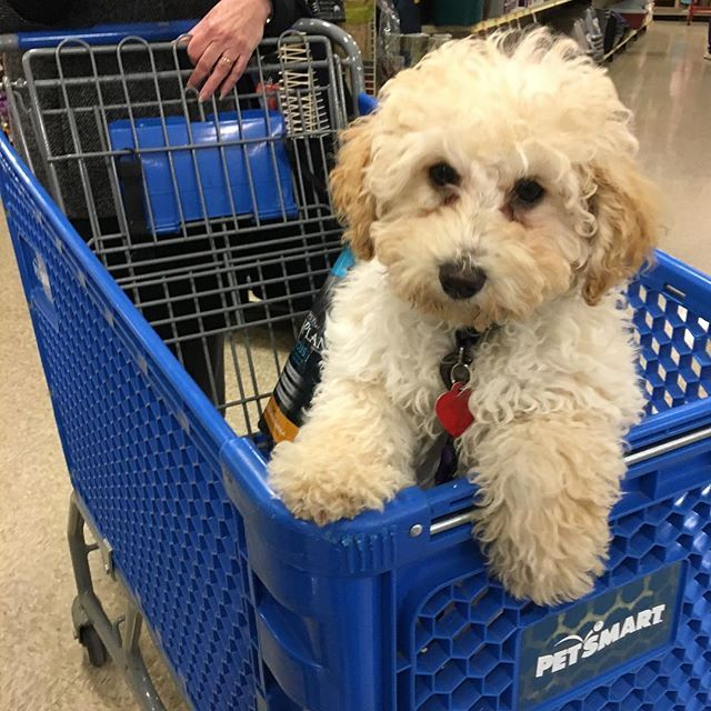 Pet Supplies Pet Accessories And Many Pet Products Petsmart Petsmart Pet Accessories Your Pet