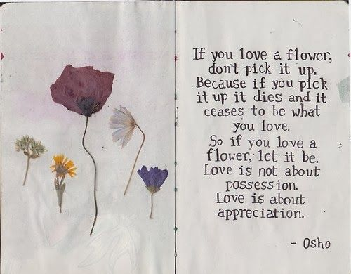 Love Is Not About Possession Love Is About Appreciation Osho