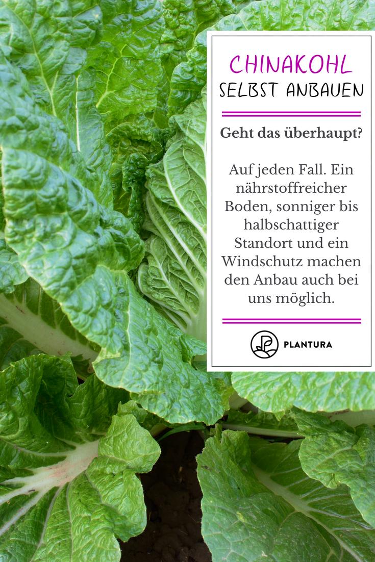 Pin Auf Gewachshausgarten